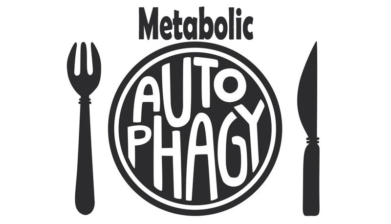SHR # 2381 :: Leveraging Metabolic Autophagy to Improve Muscle Gains